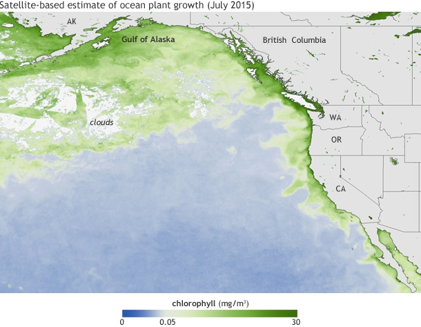 Climate NOAAView_chloro_july2015_610